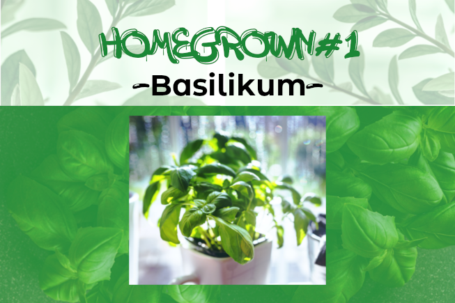 Homegrown #1: Basilikum
