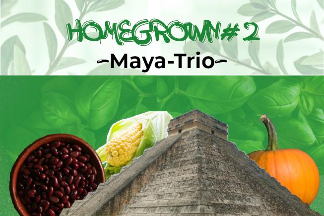 Homegrown #2: Maya-Trio (Milpa)