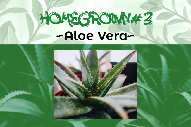 Homegrown #3 – Aloe Vera